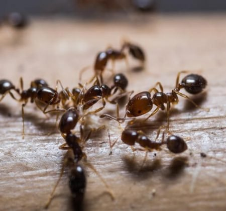 Ground Residential Ant Control + Baiting Treatment