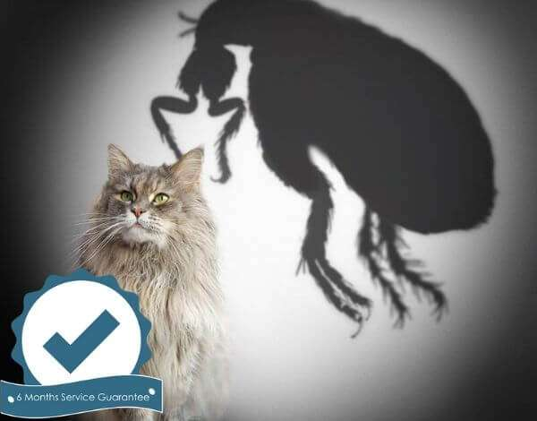 pest control flea treatment brisbane sunshine coast gold coast-56